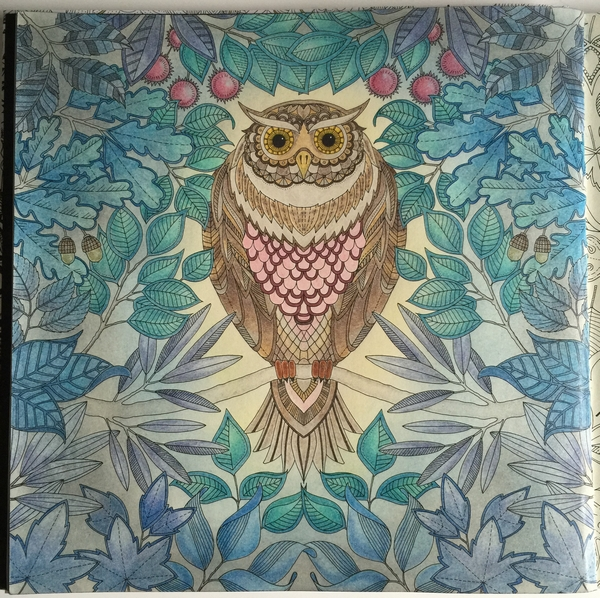 Brown Owl lit up in the Night Forest with soft pastel background