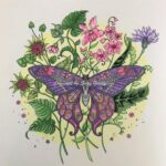 Butterfly showing Coloring Pencil Techniques